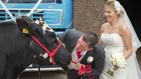 Kết hôn nhờ mai mối của ... bò | hentocdo.vn
