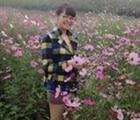 Lưu Anh